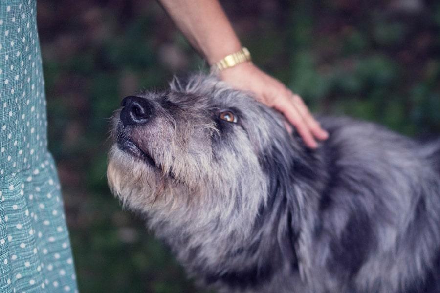 fiducia cane